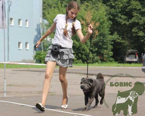 псковский клуб собаководства:
